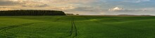 Wide Panoramic View Of A Beautiful Hilly Green Grass Field With A Tramline Under A Cloudy Sky At Sunset Light. Spring Or Summer Agricultural Landscape