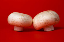 Two White Mushroom Mushrooms Close-up On A Red Background