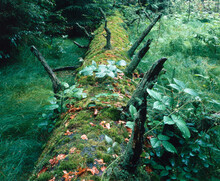 Forest, Tree Trunk, Mossy,