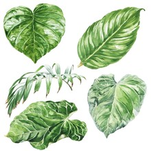 Watercolor Tropical Leaves Set On White Background. Watercolour Illustration.
