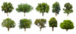 Leinwandbild Motiv Collection of   trees  Isolated  on white background,   Exotic tropical tree for design.