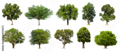 Fotografie, Obraz Collection of   trees  Isolated  on white background,   Exotic tropical tree for design