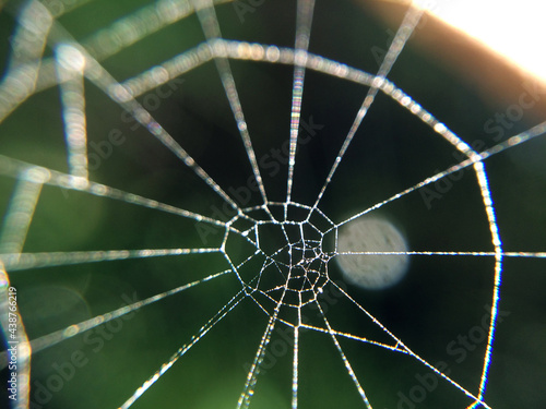 Spider web macro photo Fototapeta