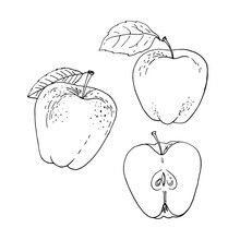 Apple Fruit Vector Drawing Of Food.
