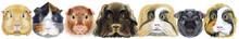 Large Guinea Pigs Border Set, Pet Portrait