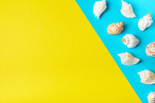 Exotic Sea Shells On A Yellow-blue Background With Copy Space