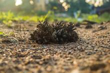 Urchin On The Ground