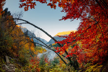 Autumnal Trees With Colorful Leaves In Mountain Forest