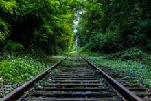 Railway In The Woods