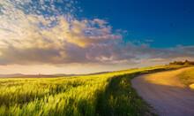 Summer Nature Landscape. Dirt Road Through A Green Wheat Field.  Sunset Over The Field