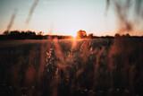 Fototapeta Rainbow - Zachodzące słońce nad polem