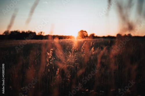 Zachodzące słońce nad polem