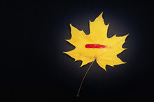 Yellow Maple Leaf On A Black Background With A Red Paint Mark On The Leaf