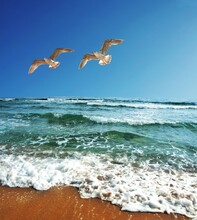 Two Seagulls Flying Above The Blue, Green, And White Water Waves On The Ocean Beach And Under The Beautiful Blue Sky. Beautiful  Nature Image.