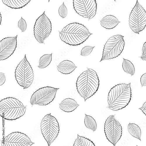 Seamless background with elm leaves, black and white, line art. Fototapet