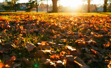 Dry Autumn Leaves On The Ground In Sunny Weather
