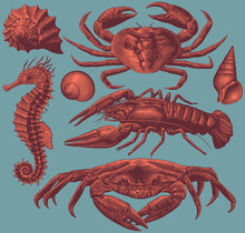 Sea Creatures. Design Set. Hand Drawn Engraving. Editable Vector Vintage Illustration. Isolated On Color Background. 8 EPS