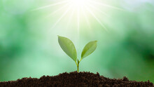 A Small Tree Growing On A Pile Of Soil And Sunlight Shining Down With Green Nature Background.