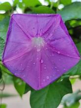 Rain Drops On Pink Flower
