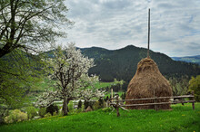 A Haystack With A Flowering Tree Against The Backdrop Of A Beaut