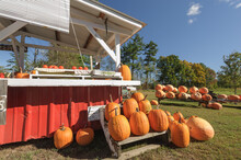 Pumpkins For Sale At A Colorful Roadside Stand In Autumn New England