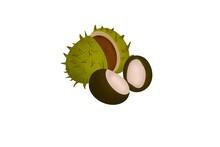 Autumn Split Green Chestnut Hand-drawn Digital Illustration