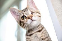Brown Eye Of One-eyed Kitten.