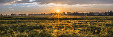 Wheat Field, Panorma. Landscape Of Agricultural Crop And Sunset Sky.