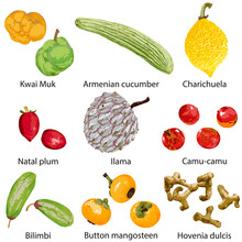 Set Of Fruits On A White Background With The Name