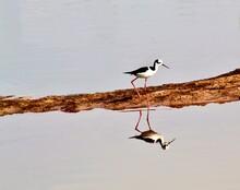 Aquatic Birds In The Urban Environment