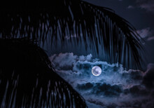 USA, Florida, Boca Raton, Full Moon And Clouds Behind Palm Leaves