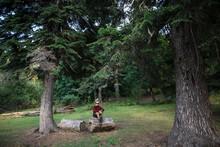 Switzerland, Swiss Alps, Appenzell, Man Sitting On Log Between Pine Trees