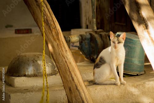 Fotografie, Obraz Gato de casa en el patio mirando a la nada