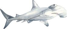 Hammerhead Shark Watercolor Illustration. Perfect For Printing, Web, Textile Design, Various Souvenirs.