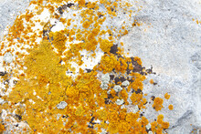 Gray Rock With Yellow Moss