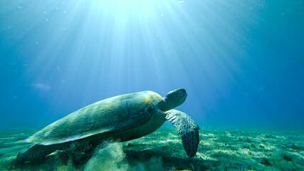 turtle underwater at the bottom