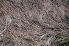 Closeup Of Flattened Cordgrass In Coastal Salt Marsh.