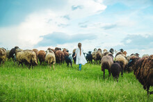 Child With Sheep And Goats In The Meadow. Selective Focus.