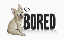 Typography Slogan With French Bulldog ,vector Illustration For T-shirt.