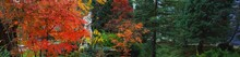 Panoramic View Of The Beautiful Ornamental Garden In A Public Park. Mighty Trees And Decorative Plants. Green, Golden, Red Leaves. Statue In The Background. Atmospheric Landscape. Nature, Recreation