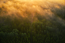 Drone View Of Forrest During The Sunset In Sweden . High Quality Photo