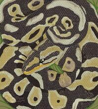Texture Background Snake Skin Python
