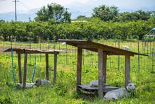 山羊がいる農村の風景
