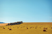 Village Life: Harvesting Hay For The Winter. Animal Feed. Hay Sheaves In The Field