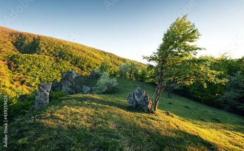 Fotografie, Obraz Tree on mountain at spring