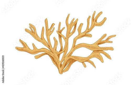 Fotografiet Irish sea moss or Carrageen