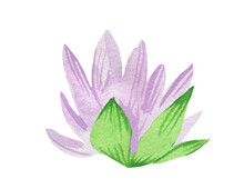 Watercolor Cute Purple Water Lily With Green Leaves On White Isolated Background.Mystical And Botanical Illustration For Halloween Hand Painted.Design For Cards,packaging,sticker,invitation Card.