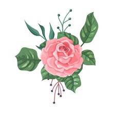 Flower. Cartoon Garden Pink Rose With Green Leaves. Blossom And Greenery. Isolated Vintage Floral Decoration. Elegant Blooming Plant Branch. Vector Botanical Bouquet Element Template
