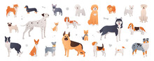 Dog Breeds Collection. Set Of Purebred Dogs In Cartoon Flat Style On White Background. Illustration Of Shiba Inu, Dalmatian, Pug, Pomeranian, Beagle And More Pets In Vector