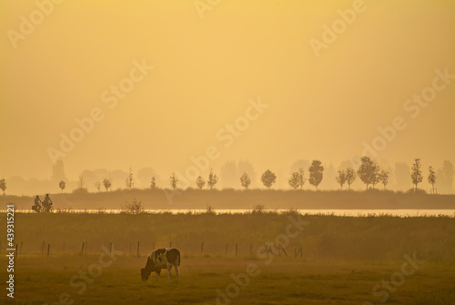 Canvas Print Sunset view of a Dutch polder with silhouettes of cyclists and cow